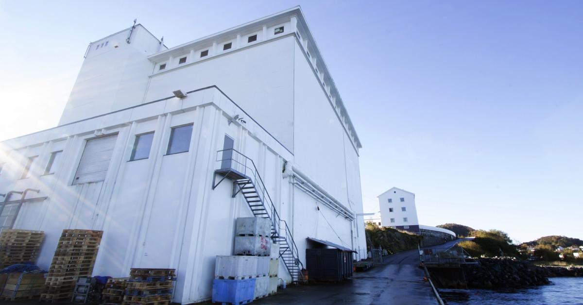 Som en del av en større oppgradering hos Sunnmøre fiskeindustri, har vi installert kjøleutstyr til et stort nytt kjølerom som også kan brukes som fryserom.